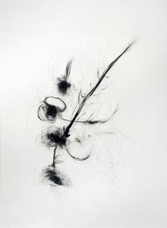 """""""Fleur"""", 2010, mine de plomb sur papier, 42 x 30 cm."""
