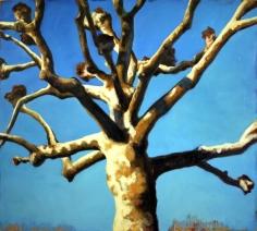 """""""Platane"""", 1996, huile sur toile, 170 x 190 cm"""