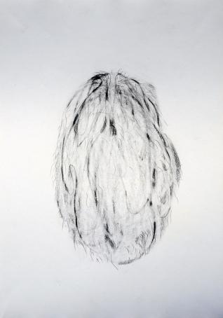 """""""Graine"""", 2017, mine de plomb sur papier, 42 x 30 cm."""